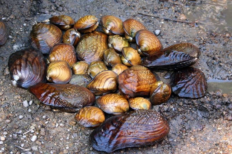 USRC Allerton Park mussel survey 1